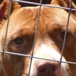Mit o kilkutonowym uścisku szczęki psa