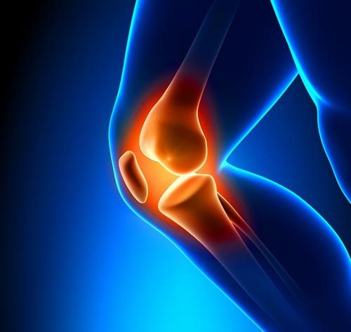 przekrój kolana